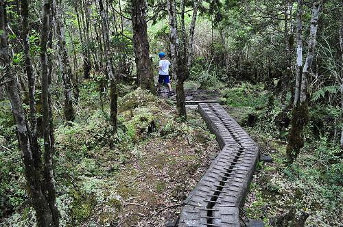长条木头铺成的独木桥式步道