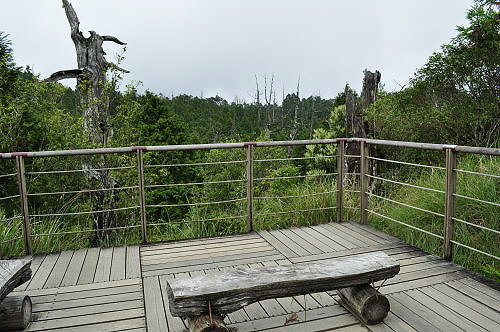 白木林观景平台.