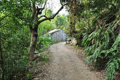 永安景观步道.八卦茶园.石碇千岛湖