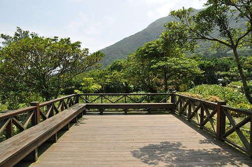 海芋园中的观景平台.
